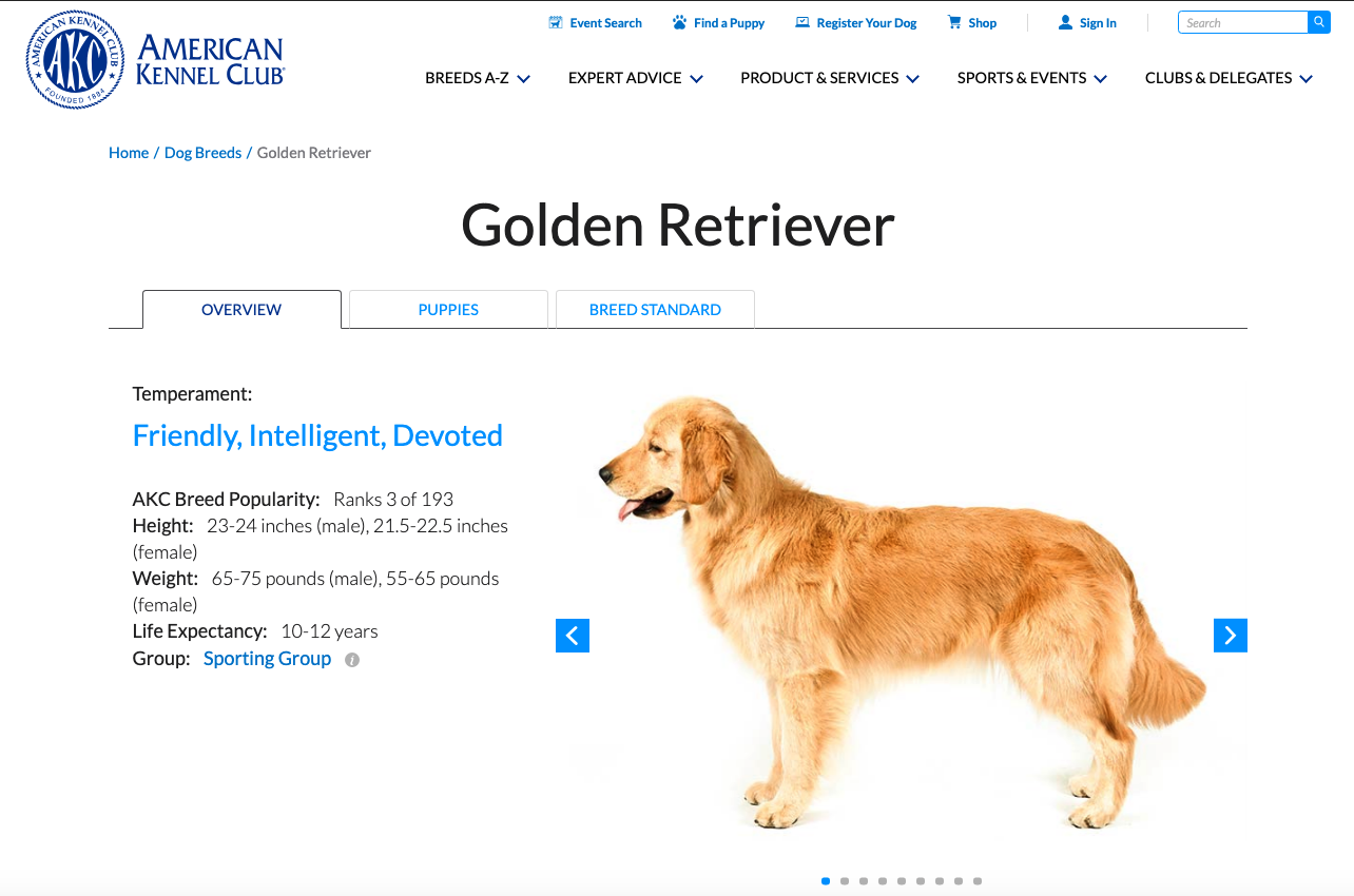 Golden Retriever On Page SEO